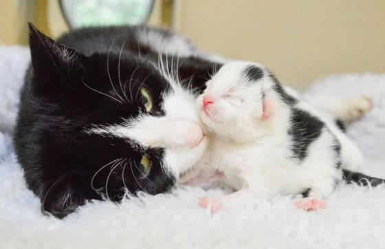Послеродовое состояние кошки: особенности ухода в первые дни после окота