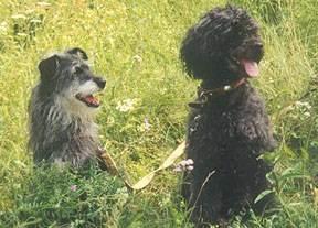 Осторожно клещи!!! - кровь в моче при пироплазмозе у собак - запись пользователя наталья (id824741) в сообществе домашние животные в категории собаки. болезни, прививки, советы по уходу - babyblog.ru