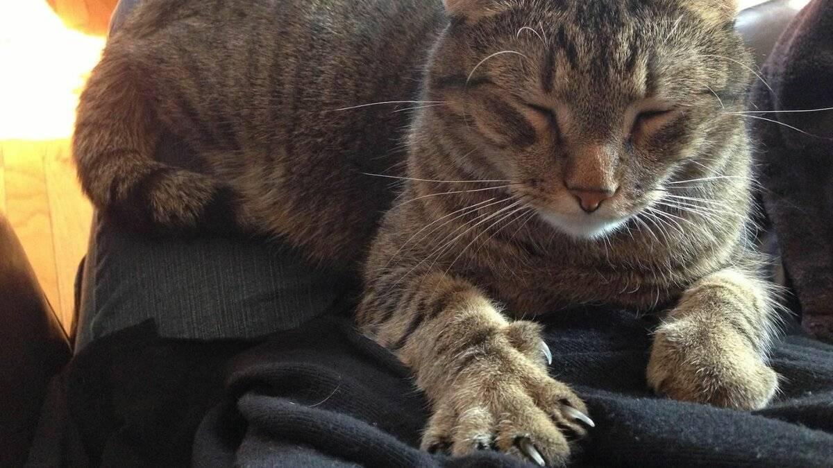 Кот сильно трясет ушами: причины и что делать