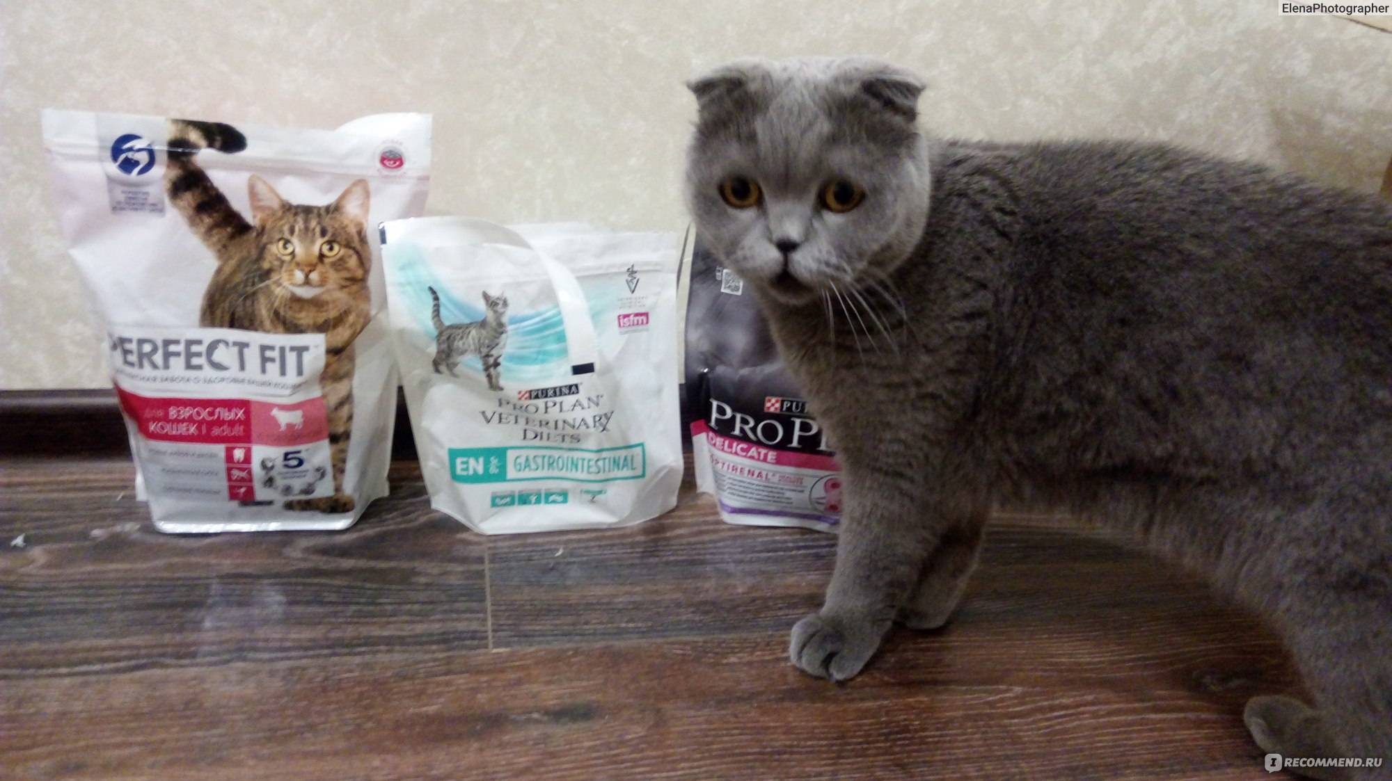 Чем кормить шотландского прямоухого котенка: меню по возрастам