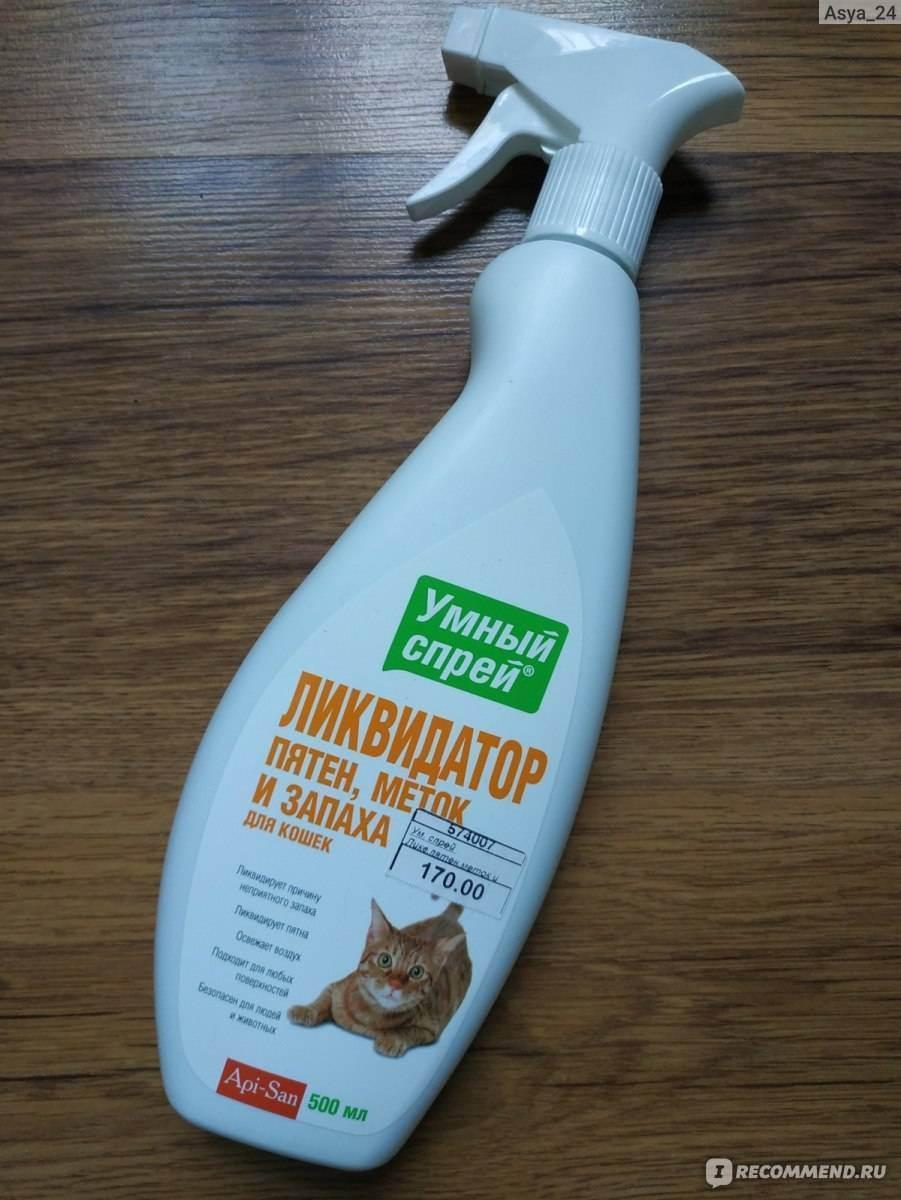 Чем вывести запах кошачьей мочи: обзор домашних и магазинных средств