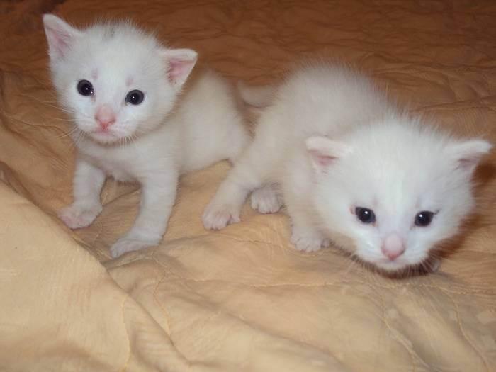 Новорожденные котята: развитие и правила ухода