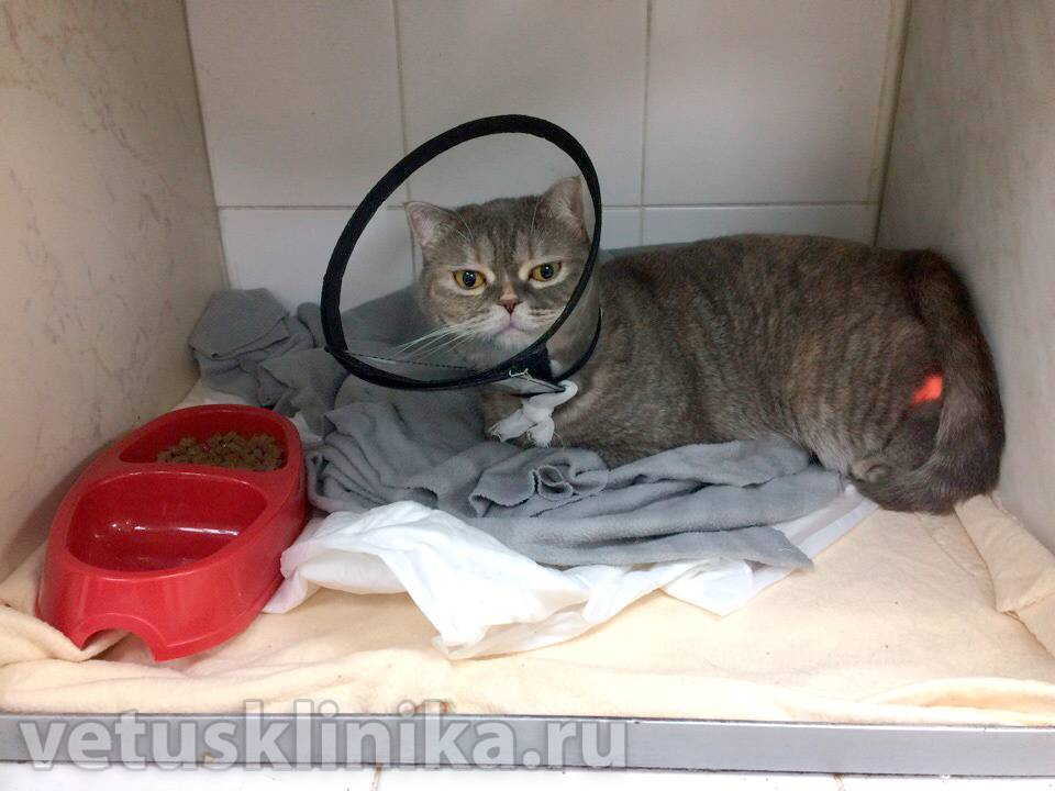 Гастрит у кошек: симптомы, лечение в домашних условиях