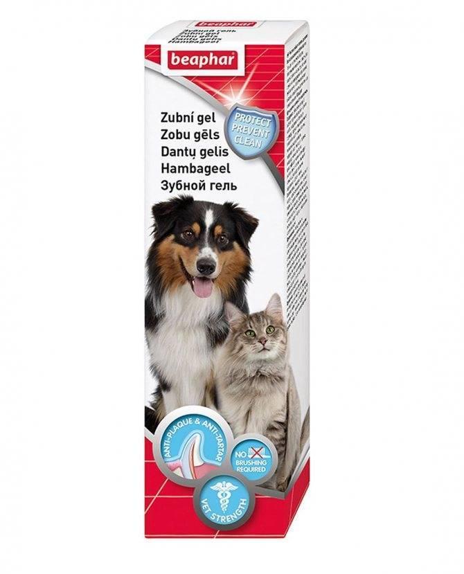 Как чистить зубы кошке в домашних условиях? | hill's pet