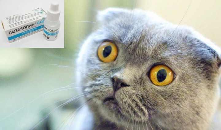Что делать, если кот чихает и у него текут сопли?