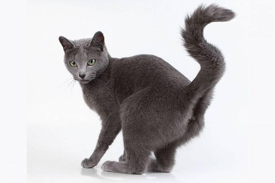 Отчего кошка начинает метить в квартире, как ее отучить от этого