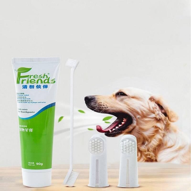 Как чистить зубы кошке: что потребуется, как проводить
