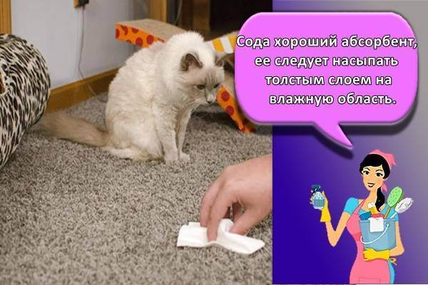 Чем вывести запах кошачьей мочи с пола: обзор способов