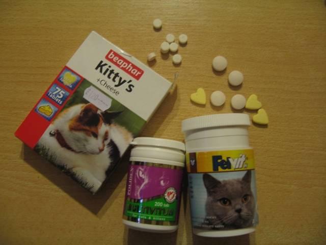 Чем кормить мейн куна, чтобы вырос большим – правила, нормы, рационы для малышей и взрослых котов