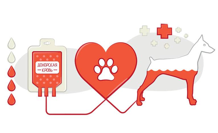 Определение группы крови и перекрестные пробы на совместимость для проведения переливаний крови