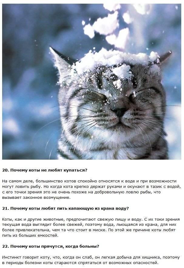 Интересные факты: кошки | интересные факты вики | fandom