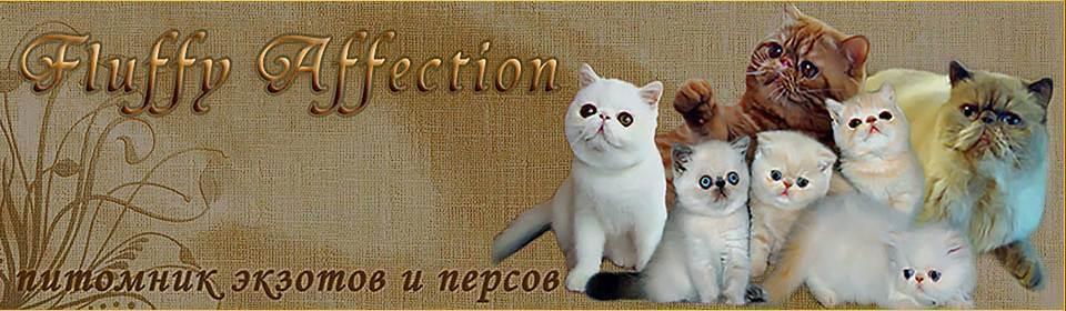 Инстинкт продолжения рода, или cексуальные кошачьи проблемы