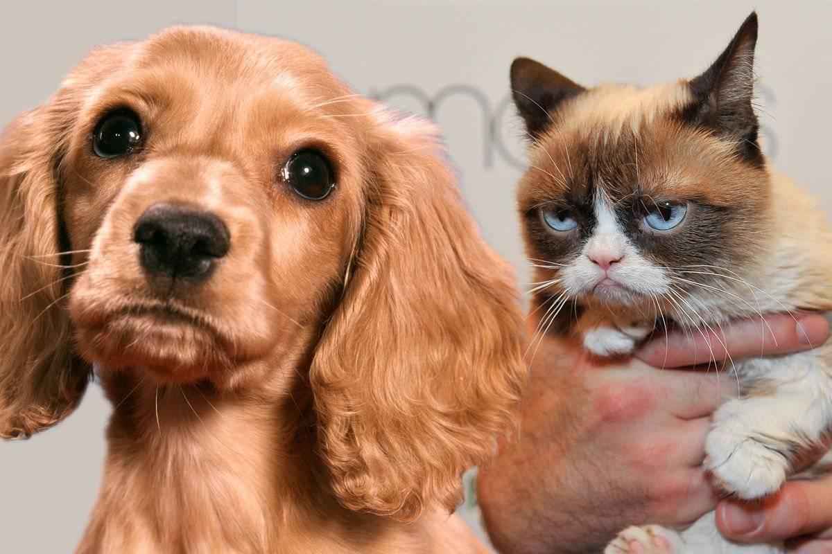Как подружить кошку и собаку: советы профессионалов, а также кто лучше и кого выбрать - щенка или котенка, кота или собачку