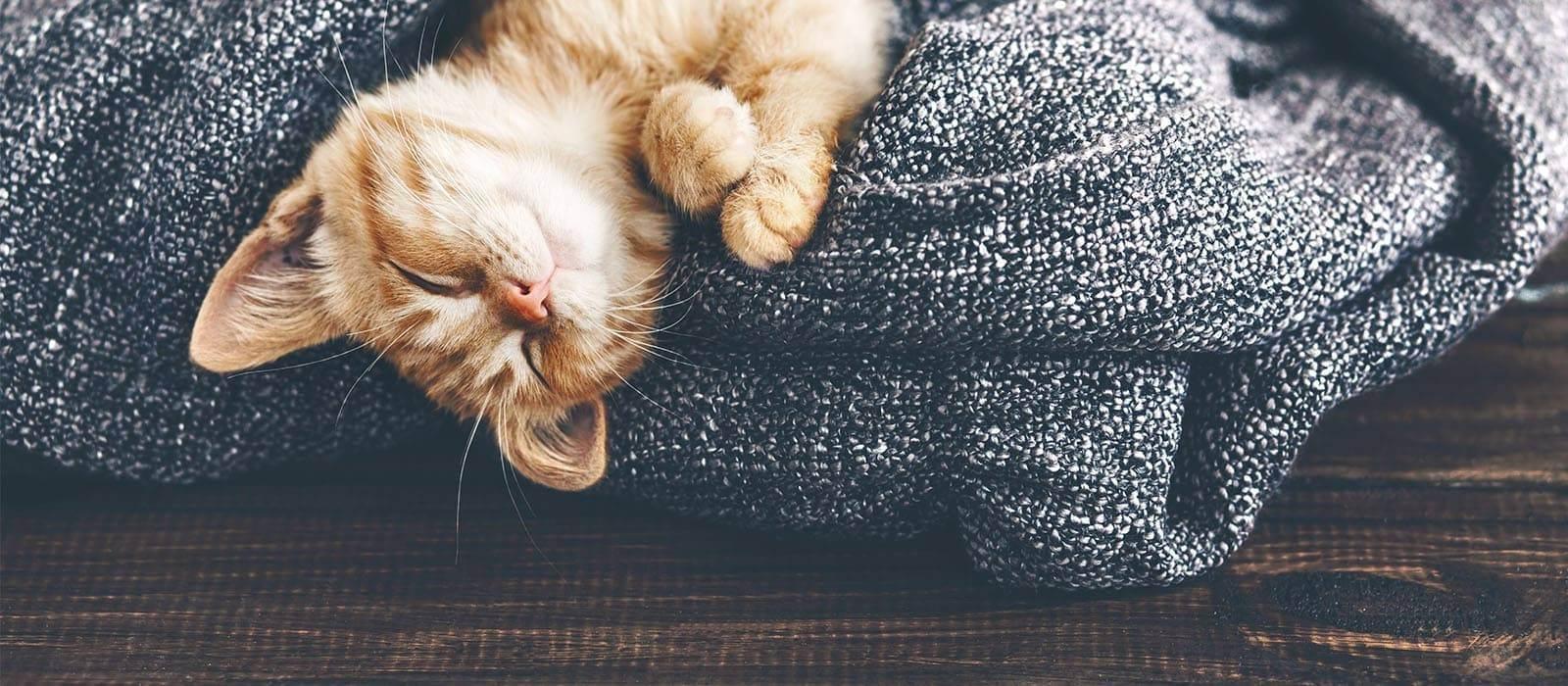 Психические потребности домашней кошки