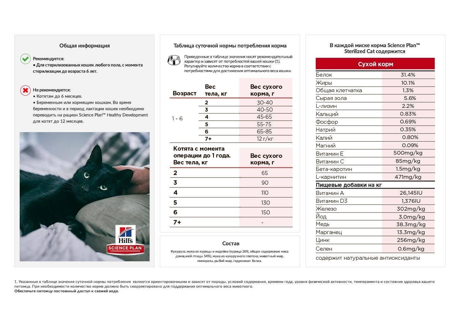 Чем кормить кота или кошку: как правильно, сколько раз, рецепты