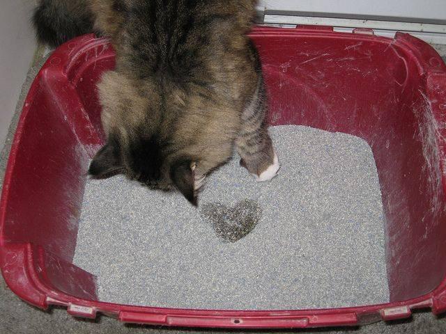 Почему у кота темная моча и что при этом делать?