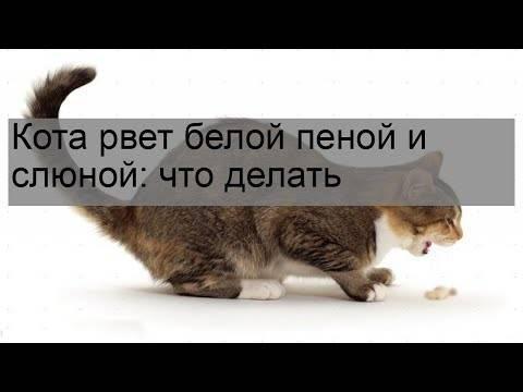 В чём причина того, что кошку рвет белой пеной и как оказать помощь