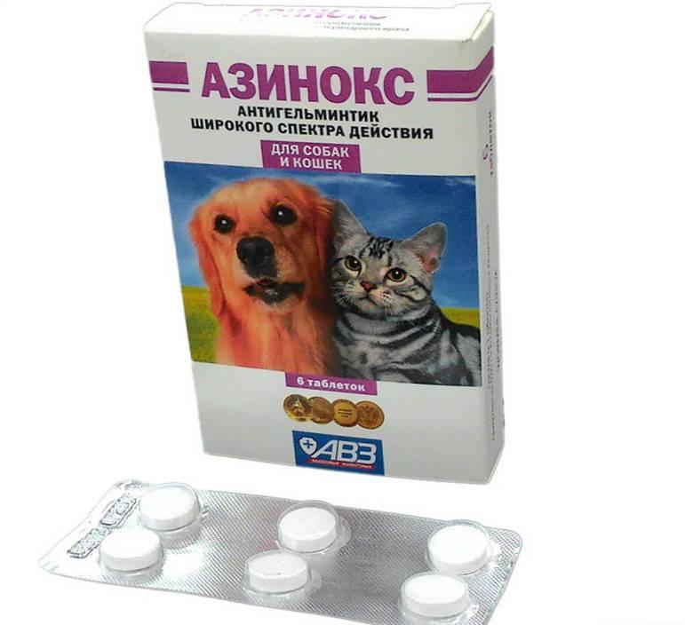 Ветом 1.1: инструкция по применению для собак, цена и отзывы