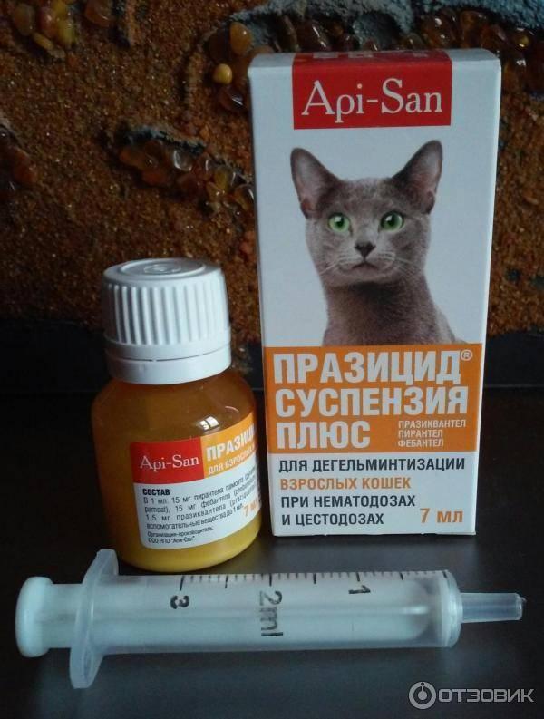 Глисты у кошек симптомы и лечение в домашних условиях