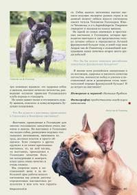 Щенок французского бульдога: прививки, а также чем кормить питомца в первые 2 месяца и допустимо ли сухое питание, как правильно дать хорошее воспитание собаке?