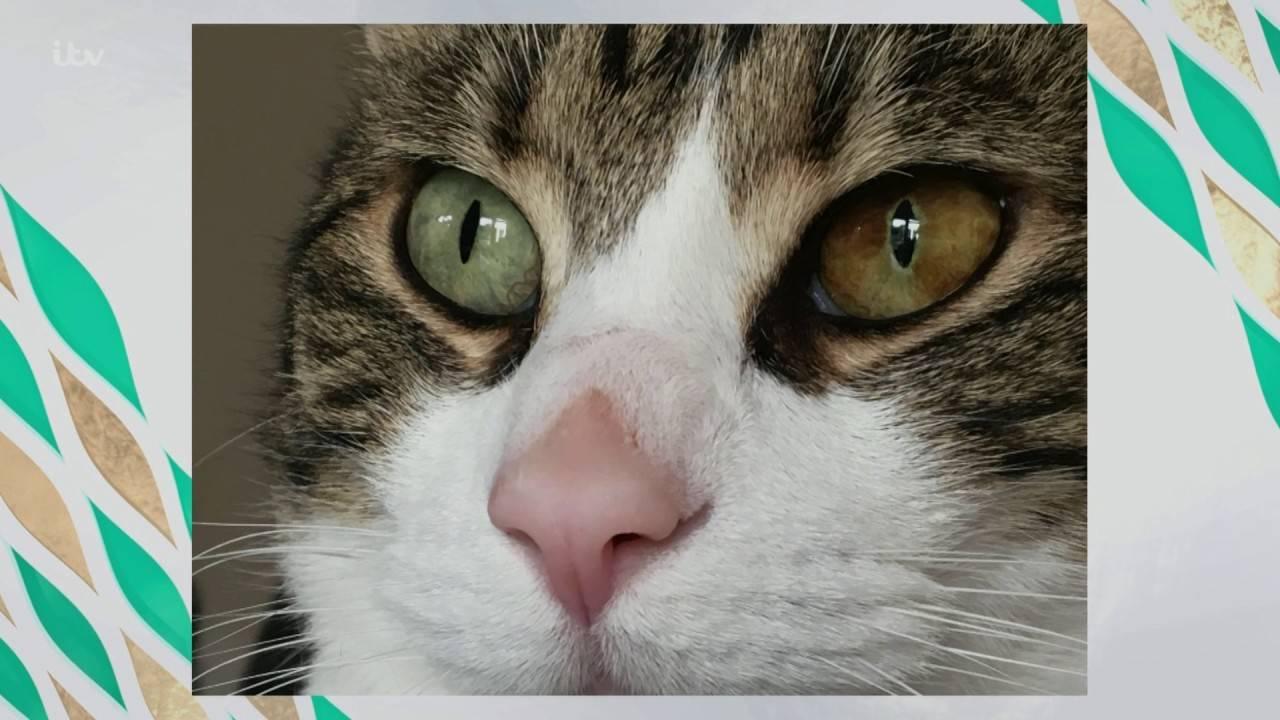 Изменение цвета глаз у кошек.