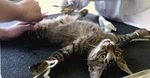 Стерилизация кошек — основные плюсы и минусы