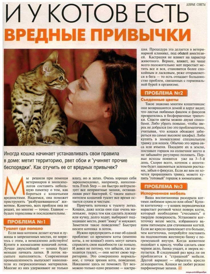 ᐉ какой запах отпугивает кошек? - ➡ motildazoo.ru