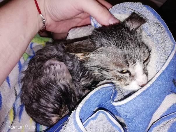 Примеры предвестников родов у кошки: поведение животного и как распознать схватки