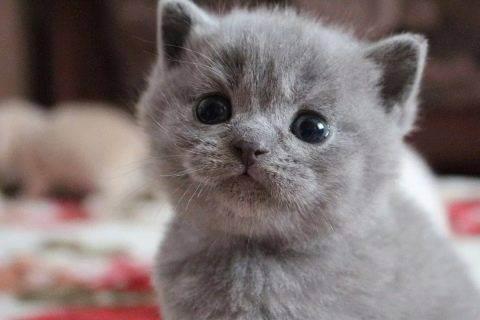 Как отличить кота от кошки: советы по определению пола питомца ' кошки '