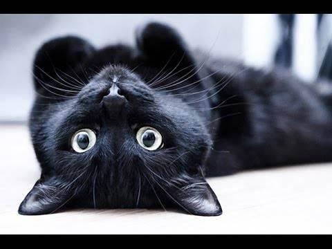 О приметах народов мира про кошек