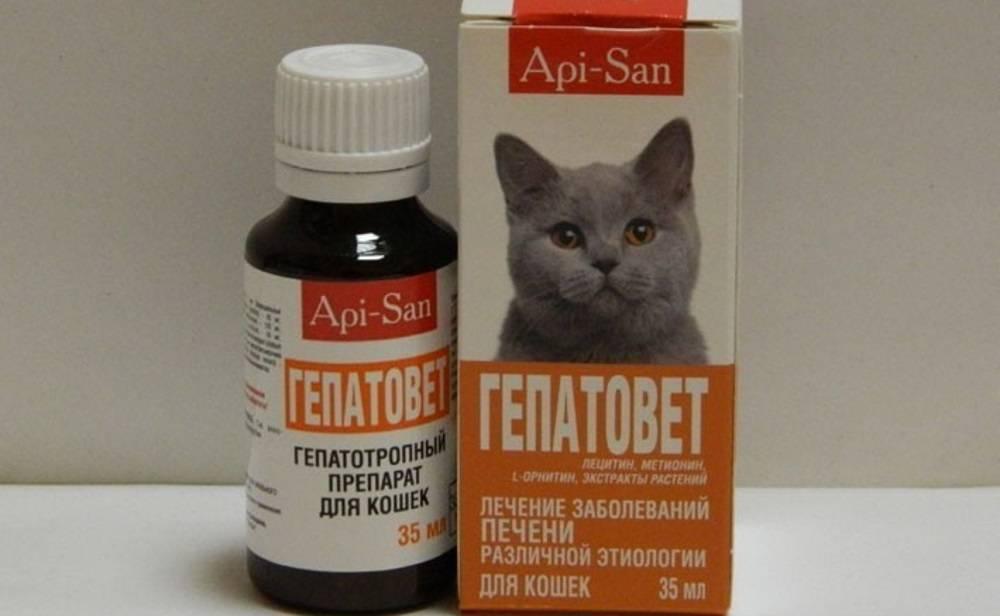 Болезни суставов у кошек: причины, симптомы, лечение
