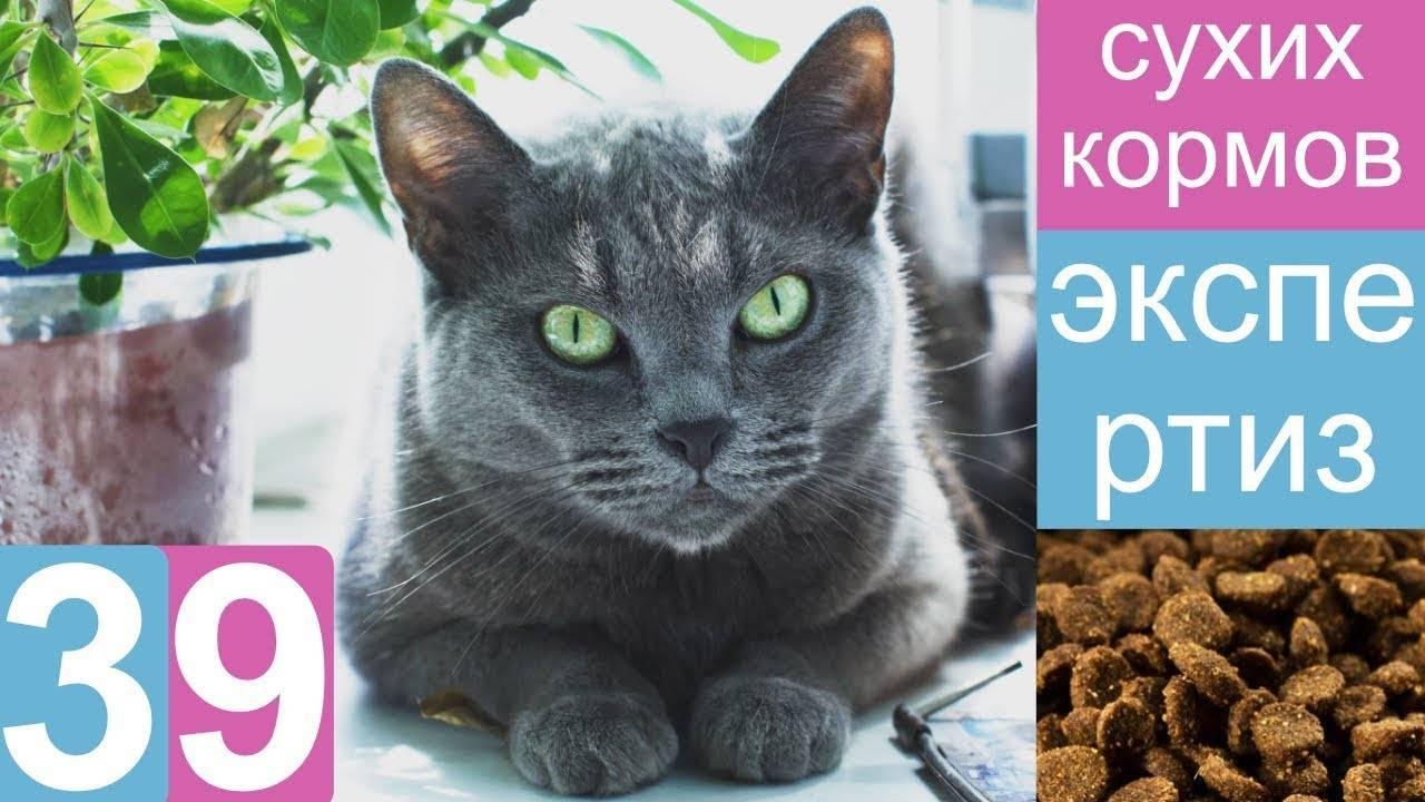 Сравнение кормов для кошек по составу