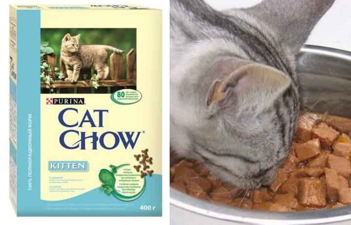 """""""кэт чау"""" cat chow - корм для котов и кошек : состав, недостатки и преимущества, отзывы- виды корма и отзывы владельцев, цена +видео"""