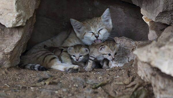 Кошки едят траву: причины, польза, вред, пищеварение