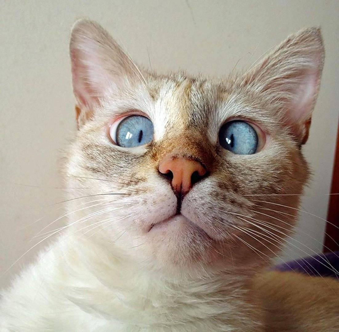 Кот беларус живёт с косоглазием, но это ему не мешает — у него армия поклонников, и он помогает другим котам