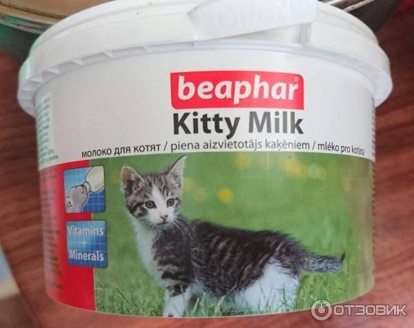 Как и чем кормить недельного котёнка: способы кормления, режим, смеси, заменители молока