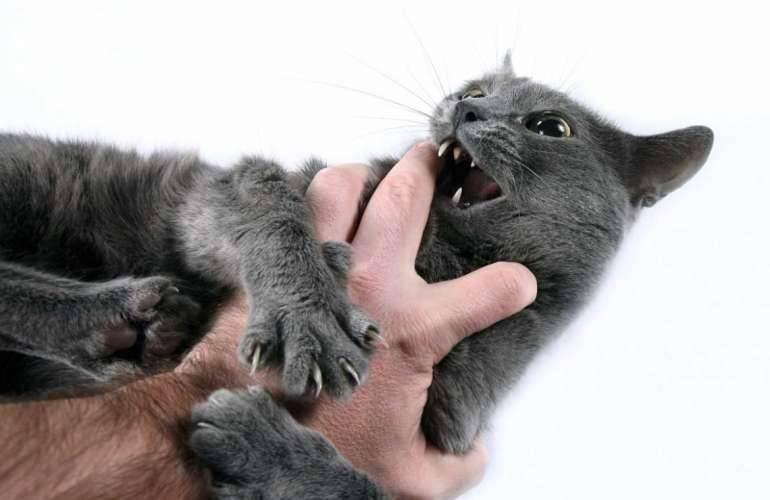 Что делать если котенок кусается и царапается, как отучить кусаться