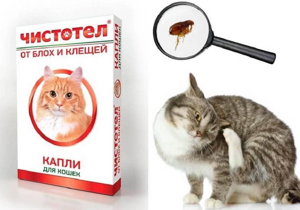 Средства против блох для кошек, какое лучше, что выбрать