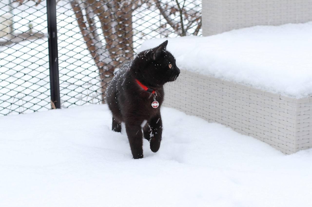 Кошечка зимой. при какой температуре кошки могут жить на улице: какие породы не переносят холода. какие породы кошек не переносят холод