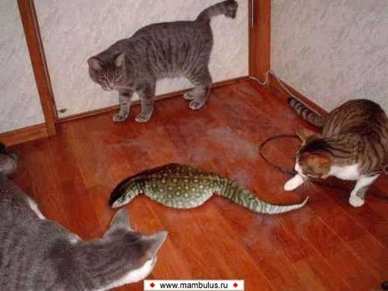 Почему нельзя использовать руки для наказаний или игр с котом