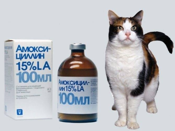 Какие антибиотики и в каких дозах можно давать кошкам