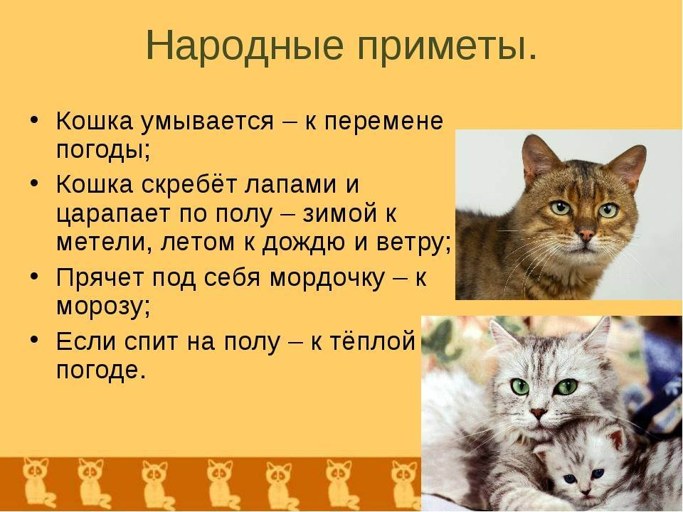Кошка пришла в дом – примета добрая или нет, к чему прибивается черный или белый кот, или котенок?