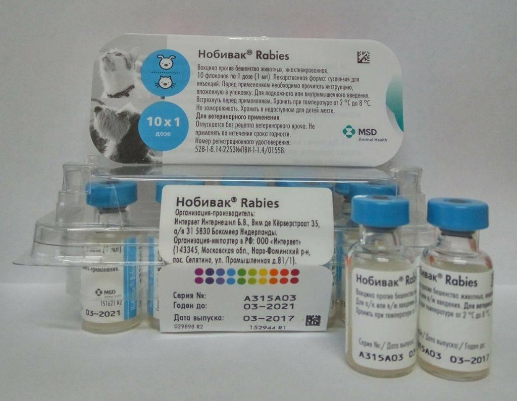 Вакцины против бешенства у кошек: виды и характеристики вакцин, какую выбрать