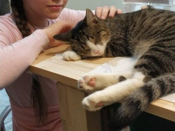 Есть ли память у кошек, какая она и сколько длится