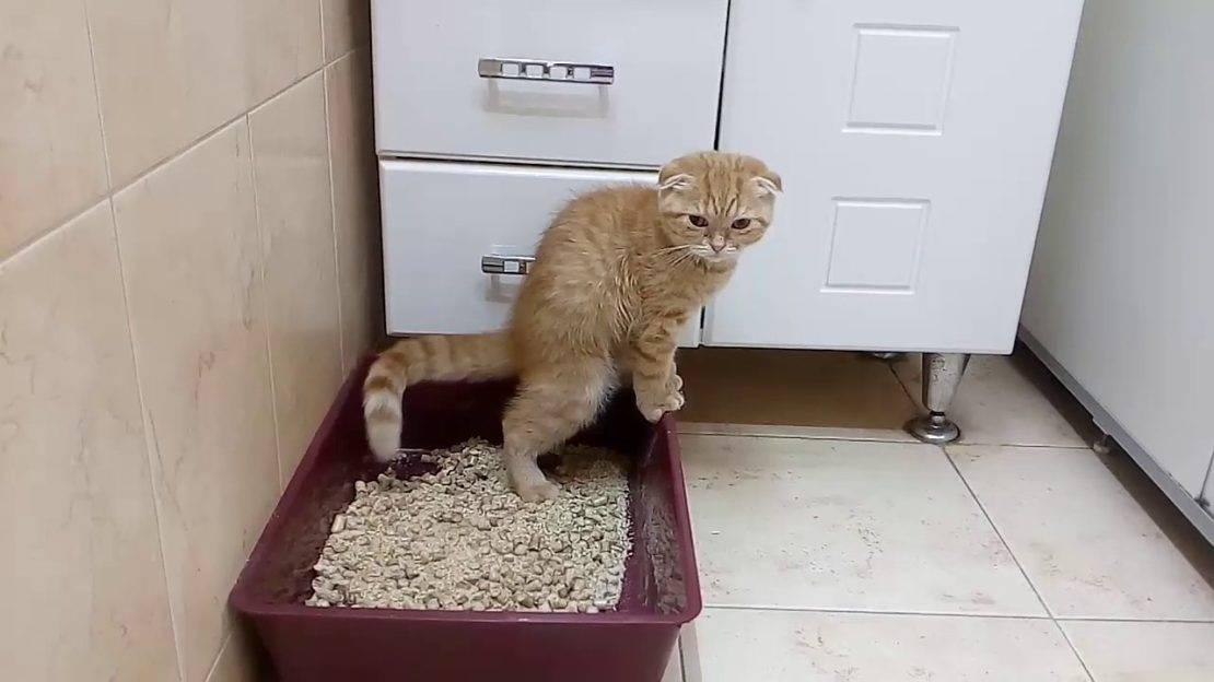 Когда котенок начинает какать