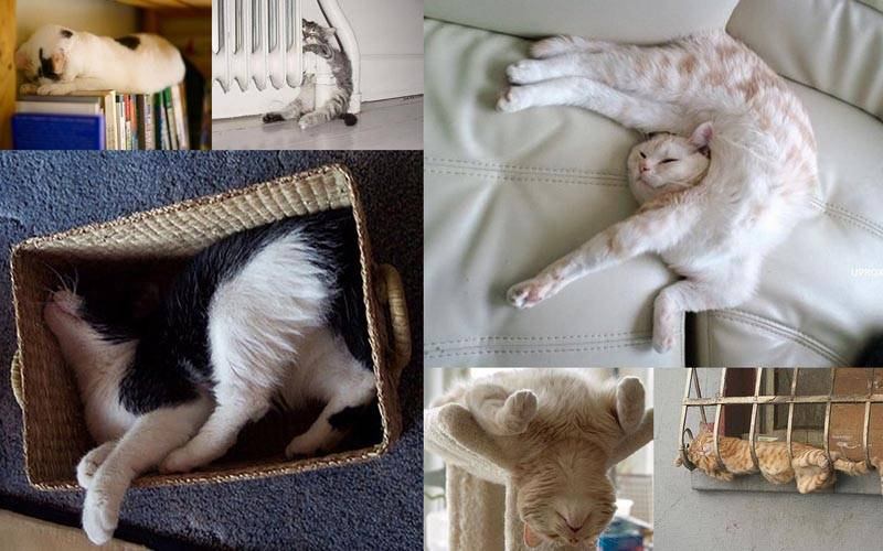 Сонник много серых котов. к чему снится много серых котов видеть во сне - сонник дома солнца