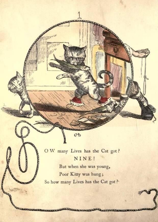 Сколько жизней у кошки – 9 или 7, правда ли это, почему так говорят?