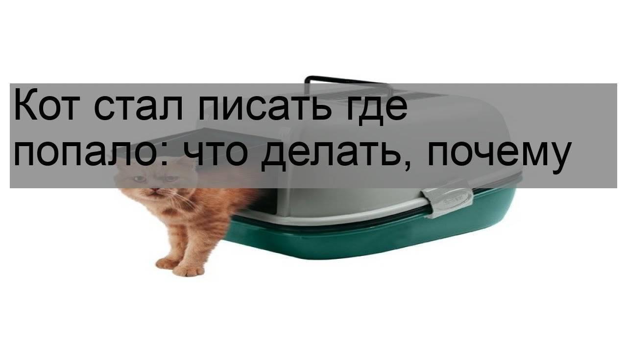 Как отучить гадить в неположенном месте кота, кошку, котенка