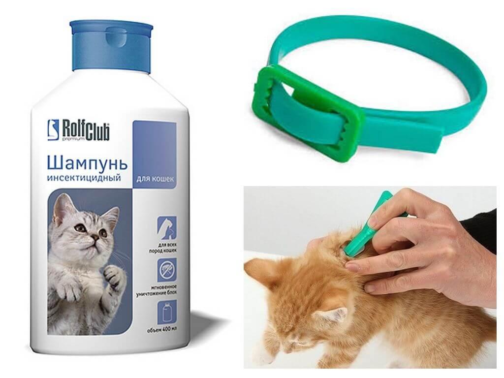 Чем вывести блох у кошки в домашних условиях: народные средства, препараты, профилактика