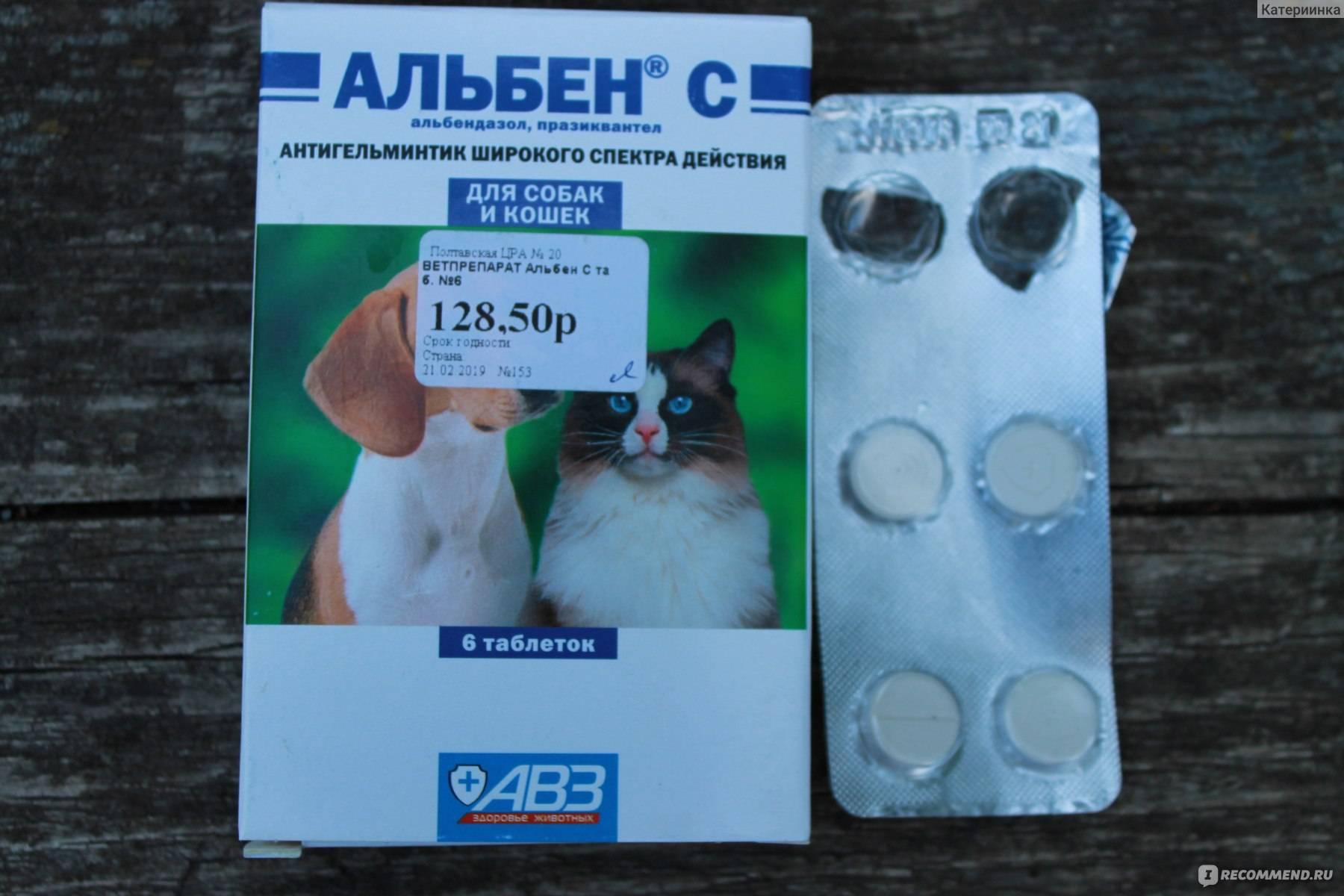 Альбен с для кошек - инструкция по применению, отзывы, цены | сайт «мурло»
